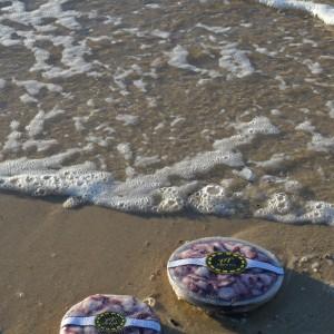 Fotos pulpo playa 084